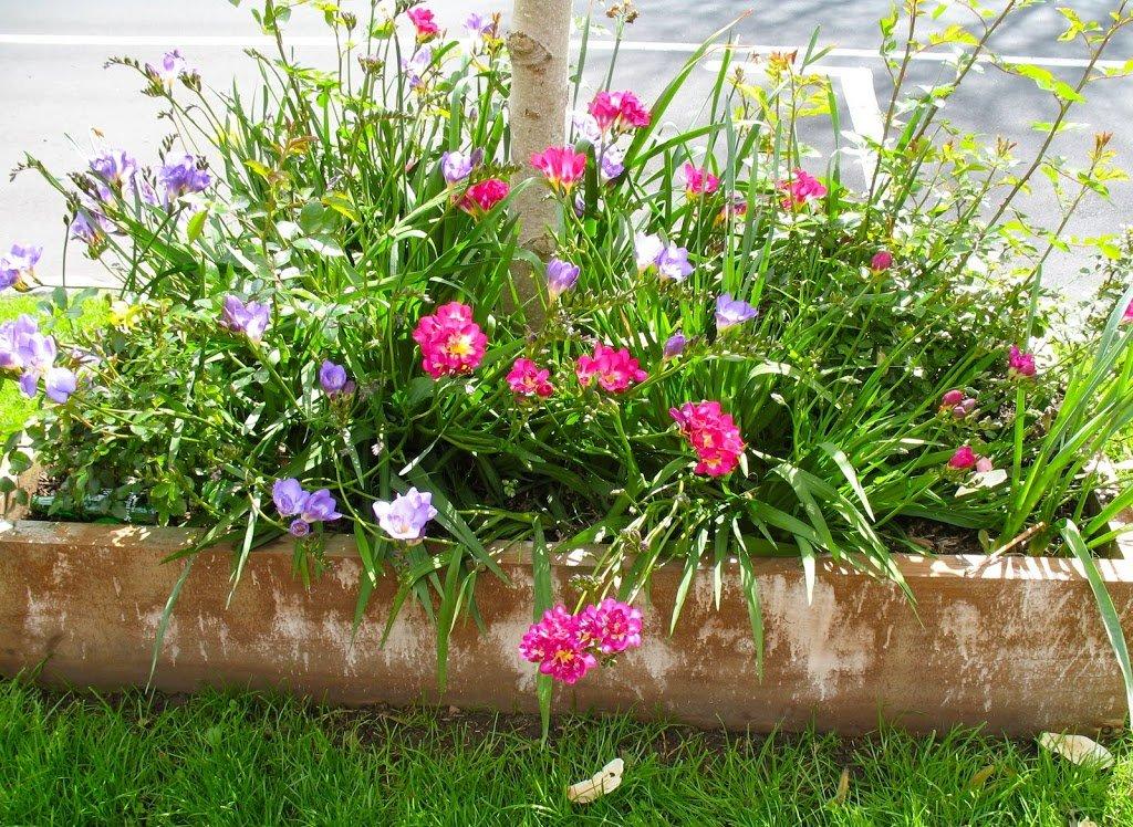 Another street garden