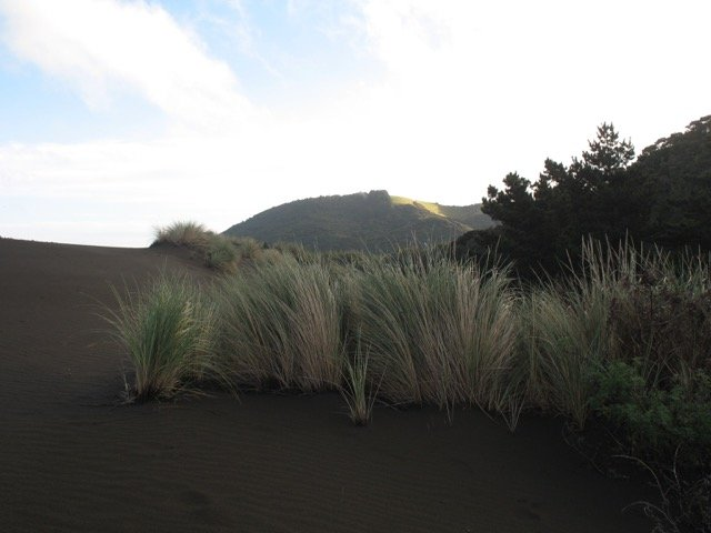 Winter dune grass IMG_3152