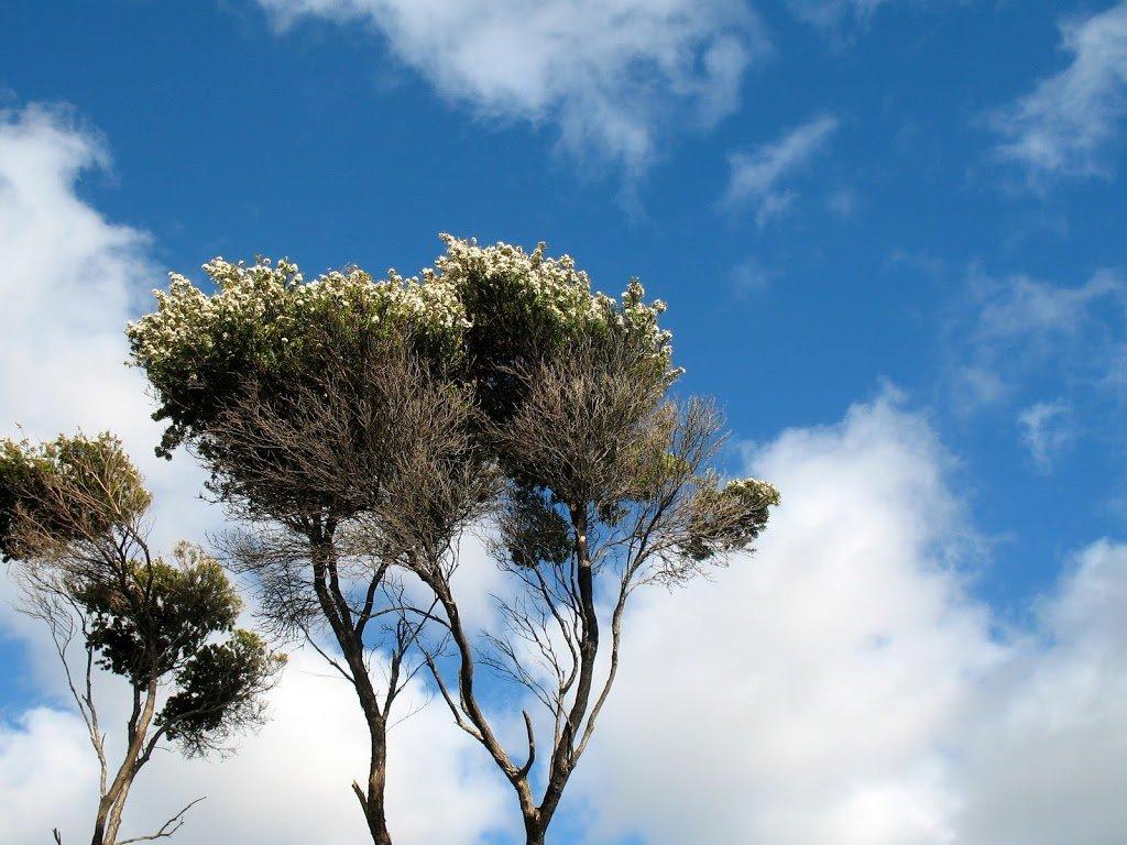 West coast flowering