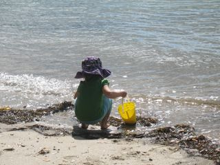 Why does seaweed smell?