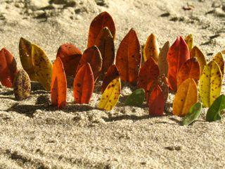 Autumn beach games
