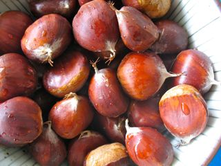 Chestnut memories