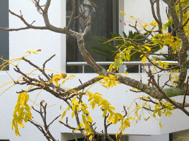 Lemon in autumn
