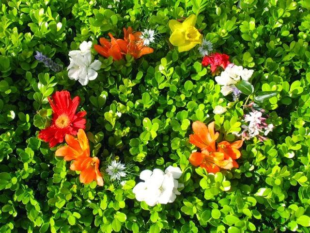 Spring Equinox colour for you