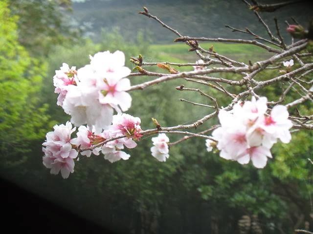 The incredible lightness of spring