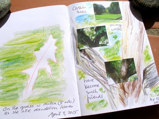 Keeping a nature diary