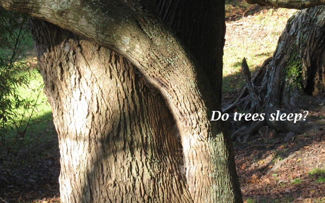 Seasons Newsletter 2021: Do trees sleep?